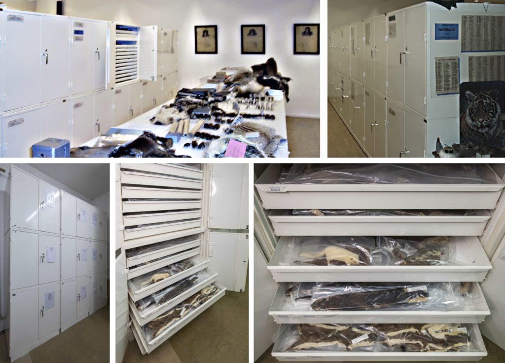Specialskåp för museernas samlingar av skinn, fåglar och ägg.